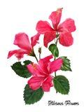 Γραφικός floral δημιουργεί από hibiscus το λουλούδι ζωηρόχρωμος στην περίληψη Στοκ Εικόνες
