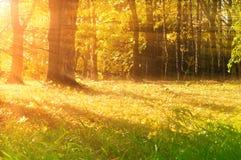 Γραφικό δάσος φθινοπώρου το πρώιμο φθινόπωρο με τα πεσμένες ξηρές φύλλα φθινοπώρου και τις ακτίνες του ήλιου - τοπίο φθινοπώρου Στοκ Εικόνες