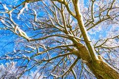 Γραφικό δέντρων δασικό χιόνι κλάδων χειμερινού ουρανού δασικό, παγετός Στοκ Εικόνα