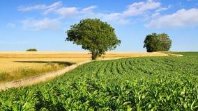 Γραφικό αγροτικό τοπίο φύσης με τους τομείς Στοκ Φωτογραφίες