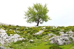 Γραφικό αγροτικό τοπίο φύσης με τους τομείς Στοκ Εικόνες