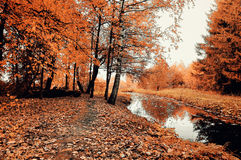 Γραφικό δασικό τοπίο φθινοπώρου - δέντρα φθινοπώρου και στενός δασικός ποταμός στο νεφελώδη καιρό Στοκ εικόνα με δικαίωμα ελεύθερης χρήσης