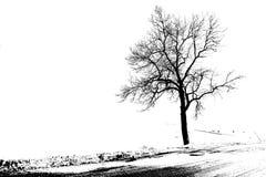 Γραφικό δέντρο Στοκ φωτογραφίες με δικαίωμα ελεύθερης χρήσης