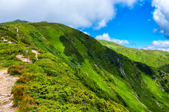 Γραφικό Καρπάθιο τοπίο κορυφογραμμών βουνών το καλοκαίρι, Ουκρανία Στοκ Φωτογραφία