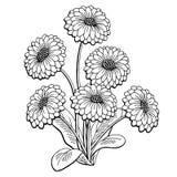 Γραφικό μαύρο απομονωμένο λευκό διάνυσμα απεικόνισης σκίτσων ανθοδεσμών λουλουδιών της Daisy Στοκ Εικόνες