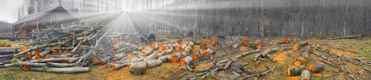 Γραφικό ξύλο κληθρών Στοκ Εικόνα