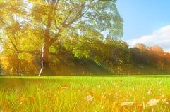 Γραφικό πάρκο φθινοπώρου - ηλιόλουστα δέντρα φθινοπώρου αναμμένα από το φως του ήλιου Φύση φθινοπώρου στις ηλιαχτίδες Στοκ Φωτογραφία