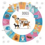 Γραφικό πρότυπο πληροφοριών σκυλιών Προσοχή Heatlh, κτηνίατρος, διατροφή, exhibiti διανυσματική απεικόνιση