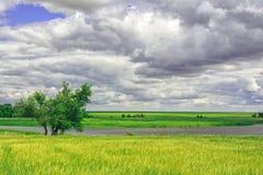 Γραφικό τοπίο με τις απόψεις της λίμνης σε έναν πράσινο τομέα της σίκαλης στο συννεφιάζω καιρό Βροχερή θερινή ημέρα Στοκ Φωτογραφίες