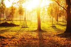 Γραφικό υπόβαθρο πάρκων φθινοπώρου Φωτεινοί κίτρινος και πορτοκάλι tre στοκ εικόνα με δικαίωμα ελεύθερης χρήσης