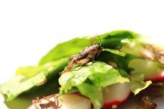 Γρύλος και φυτική σαλάτα στοκ φωτογραφία