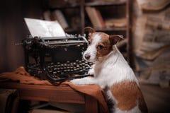 Γρύλος Russel σκυλιών Στοκ φωτογραφίες με δικαίωμα ελεύθερης χρήσης
