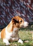γρύλος russel Στοκ φωτογραφία με δικαίωμα ελεύθερης χρήσης