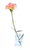 γυαλί γαρίφαλων Στοκ εικόνα με δικαίωμα ελεύθερης χρήσης