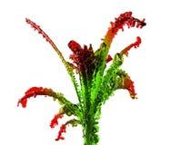 γυαλί λουλουδιών Στοκ Εικόνες