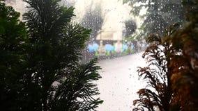 Γυαλί με την πτώση βροχής στην εποχή βροχής με τις πράσινες εγκαταστάσεις φύσης θαμπάδων απόθεμα βίντεο