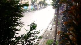 Γυαλί με την πτώση βροχής στην εποχή βροχής με τις πράσινες εγκαταστάσεις φύσης θαμπάδων φιλμ μικρού μήκους