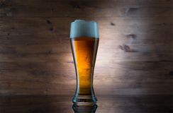 γυαλί μπύρας χρυσό Στοκ Εικόνα