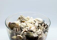 Γυαλί που γεμίζουν με τα θαλασσινά κοχύλια, τα κοράλλια και την άμμο παραλιών στο άσπρο υπόβαθρο Στοκ εικόνες με δικαίωμα ελεύθερης χρήσης