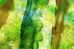 γυαλί πράσινο Στοκ Εικόνες