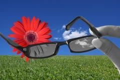 γυαλιά αλλαγής σας Στοκ Φωτογραφίες