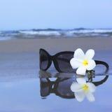 γυαλιά ηλίου λουλου&delta Στοκ Φωτογραφίες