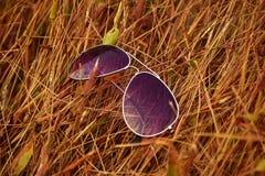 Γυαλιά ηλίου στην ξηρά χλόη Στοκ φωτογραφία με δικαίωμα ελεύθερης χρήσης