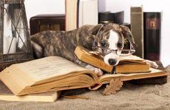 γυαλιά σκυλιών βιβλίων Στοκ φωτογραφία με δικαίωμα ελεύθερης χρήσης