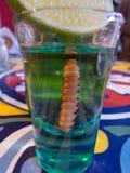 Γυαλί με το σκουλήκι tequila και κάκτων Στοκ εικόνες με δικαίωμα ελεύθερης χρήσης