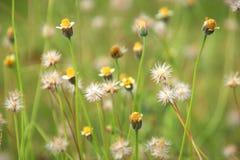 γυαλί λουλουδιών στοκ φωτογραφία με δικαίωμα ελεύθερης χρήσης