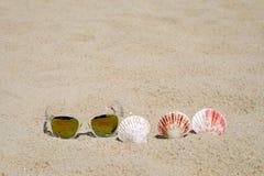 Γυαλιά ηλίου και θαλασσινό κοχύλι στο υπόβαθρο άμμου παραλιών, καλοκαιρινές διακοπές Στοκ Φωτογραφία