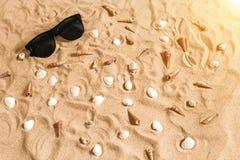 Γυαλιά ηλίου και θαλασσινό κοχύλι στο υπόβαθρο άμμου παραλιών, υπόβαθρο διακοπών καλοκαιρινών διακοπών Στοκ εικόνα με δικαίωμα ελεύθερης χρήσης