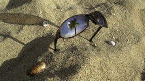 Γυαλιά ηλίου και κοχύλια θάλασσας Στοκ Εικόνες