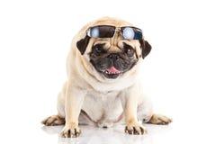 Γυαλιά σκυλιών μαλαγμένου πηλού που απομονώνονται στην άσπρη δημιουργική εργασία υποβάθρου Στοκ φωτογραφία με δικαίωμα ελεύθερης χρήσης