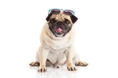 Γυαλιά σκυλιών μαλαγμένου πηλού που απομονώνονται στο άσπρο υπόβαθρο Στοκ Εικόνες