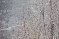 γυμνά δέντρα ομίχλης Στοκ φωτογραφίες με δικαίωμα ελεύθερης χρήσης