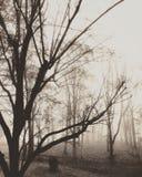 γυμνά δέντρα Στοκ Φωτογραφίες