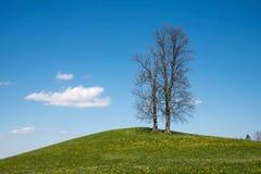 Γυμνά αντιμέτωπα δέντρα που στέκονται σε έναν πράσινο λόφο Στοκ Εικόνες