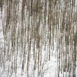 γυμνά δέντρα χιονιού Στοκ Φωτογραφίες