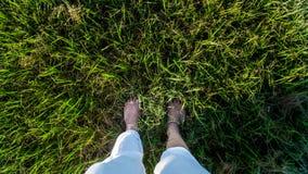 Γυμνά πόδια γυναικών με το άσπρο φόρεμα μέσα - μεταξύ του υψηλού πράσινου ζιζανίων χλόης υψηλού γωνίας άποψης φωτός του ήλιου ηλι στοκ εικόνες με δικαίωμα ελεύθερης χρήσης