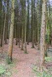 Γυμνή δασώδης περιοχή Στοκ Φωτογραφίες