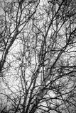 Γυμνοί δέντρα και κλάδοι Στοκ εικόνα με δικαίωμα ελεύθερης χρήσης