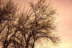 Γυμνοί κλάδοι δέντρων ενάντια στο σκηνικό του ηλιοβασιλέματος Στοκ εικόνα με δικαίωμα ελεύθερης χρήσης