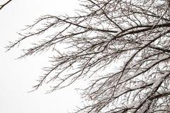 Γυμνοί κλάδοι δέντρων με το χιόνι Στοκ Εικόνα
