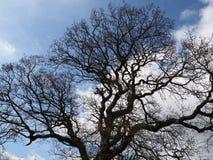 Γυμνοί κλάδοι δέντρων που σκιαγραφούνται ενάντια σε έναν μπλε ουρανό Στοκ Φωτογραφία