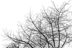 Γυμνοί κλάδοι δέντρων σε έναν άσπρο ουρανό Στοκ Εικόνες