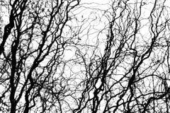 Γυμνοί κλάδοι δέντρων σε ένα άσπρο υπόβαθρο Στοκ Εικόνες
