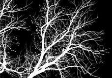 Γυμνοί κλάδοι δέντρων σε ένα μαύρο υπόβαθρο Στοκ εικόνα με δικαίωμα ελεύθερης χρήσης