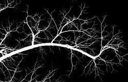 Γυμνοί κλάδοι δέντρων σε ένα μαύρο υπόβαθρο Στοκ Εικόνες