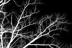 Γυμνοί κλάδοι δέντρων σε ένα μαύρο υπόβαθρο Στοκ Φωτογραφία